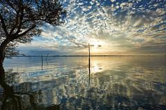 Cloud Burst (chibitomu) Tags: sunset lake reflection tree nature japan clouds canon landscape      kasumigaura ibaraki    canonef1635mmf4lisusm 5dmarkiii chibitomu namegatashi