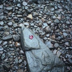 Just Like That (BunnySafari) Tags: red film rock leaf softness pebbles waterfalls upnorth yashicamat124g fpp portra160
