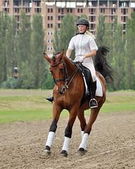 (vishenka.foto) Tags: horse saddle bandages bridle dressage