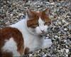 I.M. Castor (louise peters) Tags: im inmemoriam inmemoryof castor cat kat pet huisdier