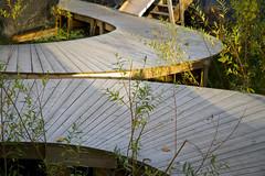 Boardwalk * explored ! * (Matthijs Borghgraef a.k.a. Kwikzilver) Tags: wood city urban detail texture netherlands dutch lines amsterdam docks de wooden matthijsborghgraef pattern curves explore boardwalk riverfront curved planks noord explored kwikzilver ceuvel