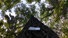 Looking Up on the white trail. (bloesch14) Tags: hike mountian woodsman baldpate