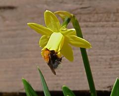 Happy Spring Equinox 2017! (The Visual Poet) Tags: happyspringequinox2017 spring blossoms seasonal joyful renewing growth awakening buds flowers birdsbeeslambstrees thankfulness
