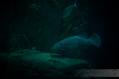 Seaquarium (JadeNoire - Interlude Photo) Tags: seaquarium sea mer aquarium poisson fish sousmarin nikon animal d7100