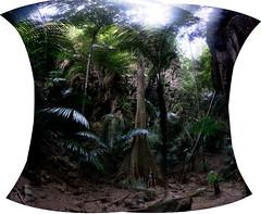 (eweliyi) Tags: 365tm2r thailand krabi railaybeach travel verticalpanorama jungle panorama tree hugetree green eweliyi me ja self woman girl treehugger composite
