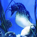 Memphis Zoo 08-31-2016 - Potbelly Seahorse 1