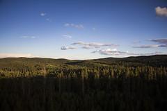 IMG_5213 (Cris_Pliego) Tags: estespark nationalpark colorado denver usa nature mountains starrynight bear overlookhotel lake forest elk bluesky