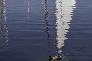 Un canard pressé (a duck in a hurry)