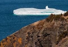 Iceberg (Karen_Chappell) Tags: iceberg ice blue white seascape nature nfld newfoundland outercove middlecove landscape scenery scenic ocean atlanticcanada atlantic avalonpeninsula sea cold spring eastcoast canada