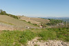DSC_0097 (Riccardo R) Tags: nature landscape panorama monferrato strevi moscato vino wine vineyards piedmont visititaly visitpiedmont nikon