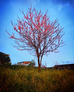 •Lone tree• 🌺🌸� #lonetree #spring #nature