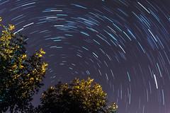 Startrails (alesegovia) Tags: stars star startrail startrails estrella estrellas fotografia nocturna noche aire libre frio circumpolar polar polo sur norte tree arbol arboles trees night