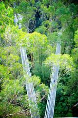 AU021231 (zkhan75) Tags: 12apostles daytrip family fun greatoceanroad otway treetopwalk princetown00 victoria australia