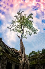 dsc_0527_edit_by_jigneshmistry-danx3f9 (jigneshmistry111) Tags: reap siem taprohm tree treeoflife tombriader thelensbible