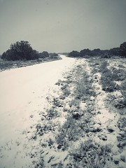 """""""Snow Road"""" An unexpected Spring snow storm covers a rural road in Central New Mexico. Cold Temperature Snow Beauty In Nature Outdoors Landscape Scenics Cold Roads Roadsidephotography Rural Newmexico Newmexicophotography Snowstorm Springsnow Blackandwhite (bradhodges09) Tags: coldtemperature snow beautyinnature outdoors landscape scenics cold roads roadsidephotography rural newmexico newmexicophotography snowstorm springsnow blackandwhitephotography blackwhite blackandwhite"""