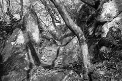 the path (ΞSSΞ®®Ξ) Tags: ξssξ®®ξ pentax k5 angle 2017 plant outdoor countryside kepcorautowideanglemc28mm128 forest monochrome blackandwhite tree trunk branches woodland underwood rocks shadows tufahill thevalleyofhorses wood path