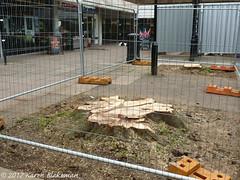 March 20th, 2017 Trees gone from St Martin's Precinct (karenblakeman) Tags: stmartinsprecinct caversham uk treestumps 2017 2017pad march