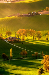 Golden Hour (emanuelezallocco) Tags: golden hour goldenhour gold nature light hills shadow sunset green yallow trees landcape photography art photo panorama colline paesaggio ora oro alberi valle valley ricoh ricohimaging pentax tamron