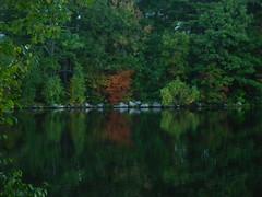 IMGP2034 A little green reminiscing (shutterbroke) Tags: shutterbroke pentax scoville reservoir fall green colors