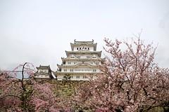 Himeji Castle (tez-guitar) Tags: castle himeji japan japanese architect spring flower cherryblossom cherry blossoms bloom pentax pentaxart petal world heritage j