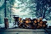 evening fog (jakobnewman) Tags: bokeh dusk fog forest fruitpress leaves light logs pavement snow spring sticks sunset trees wood