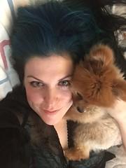 Me and corduroy (thetab3) Tags: puppy bear cute redsable pomeranian dog pom teddybear