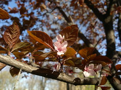 2017-03-28-7790 (vale 83) Tags: blossom nokia n8 macrodreams friends flickrcolour coloursplosion colourartaward beautifulexpression
