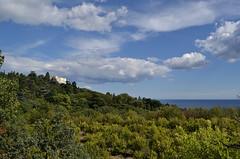 Forest in Nikita Botanical Garden (МирославСтаменов) Tags: crimea sea horizon plantings tree forest cloudscape sky greenery crown