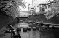 桜2017 (jonmanjiro) Tags: nikon35mmf18ltm leicaiiif sekonicl308s fujisuperia400xtra fujifilm yokohama