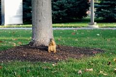 Friend. (LeanneRichelle) Tags: squirrel squirrell squirel grandrapids grandrapidsparks grandrapidssquirrel cutesquirrel squirrelfriend