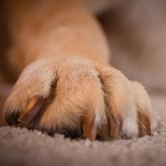 The Paw (gernot.glaeser) Tags: dog dogs animal animals deu jim nikon closeup
