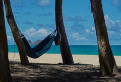 Hammock Gestation (ggppix) Tags: ocean sky woman sun tree beach silhouette clouds island hawaii sand highway surf nap pacific oahu pregnancy hwy belly shade hammock sherwoodforest relaxation ironwood gestation recreationarea captureonepro kalanianaole route72 casuarinaequisetifolia waimānalo mokuiki horsetailcasuarina mokunui waimānalobay fujifilmxpro1 fujinonxf60mmf24rmacro garyglenprice kalaniana'ole