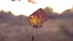 """Autumn in the city"" Teaser 2014 (Photographer Philip Pena) Tags: park travel autumn forest season pena kazakhstan philip leisurepark nightcity citytour timelaps birchforest kostanai  timelapsnight timelapsesunset timescity rydnyy timesnature rydny philippena photofrpaherphilippena"