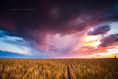 Lightning strikes over wheat crop, South Australia (Robert Lang Photography) Tags: color colour nature beautiful beauty weather danger rural wow spectacular fire amazing colorful farming dry nopeople best crop strike sa lightning colourful top10 agriculture southaustralia epic strikes hazard robertlang portlincoln eyrepeninsula portlincolnsouthaustralia epiclightning crazylightning coomunga farmingaustralia robertlangportlincoln robertlangphotography farminglandontheeyrepeninsulasouthaustralia lightningstrikesoverwheatcrop worldsbestlightningphoto amazinglightningphoto bestlightningphoto spectacularlightningphoto wowlightning lightningstrikeshittingtheground