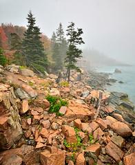 Maine Coast Fall 2014 (willsdad48) Tags: park new autumn england seascape 35mm landscape coast nikon maine fallfoliage national acadia d800