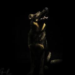 Voltan (Carlos Giesemann) Tags: chien happy amigo perro hund perros mansbestfriend feliz podenco
