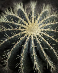 Cactus (katemortoncp) Tags: cactus plants botanical greens spikey jaggy mutedtones