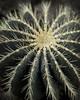 Cactus (katemortoncp) Tags: cactus plants botanical greens spikey jaggy mutedtones