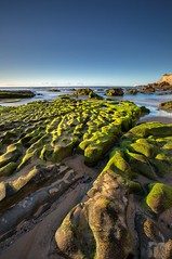 South Newcastle Ripples (archie0) Tags: portrait sunrise moss rocks australia ripples crevices southnewcastlebeach