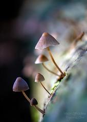 Small world ((Virginie Le Carré)) Tags: light mushroom moss dof bokeh lumière trunk pdf lightandshadow champignon mousse tronc lumièrenaturelle