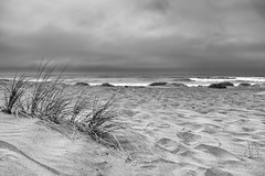 (alliance1) Tags: ocean morning blackandwhite bw beach bodegabay 2014 fujix100s