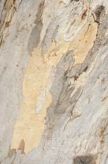 Nature art (curiousl) Tags: pink autumn abstract tree art nature vertical painting grey israel pastel bark eucalyptus tender 2014