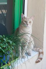 Wilfred (carmenrizo) Tags: naturaleza nature beauty ilovemycat catcloseup catseyes ilovecats beautifulcats youngcats nosecats gatosdelmundo gatosdeflickr