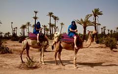 2014 07 - Marrakech & Ouzoud Morocco  1801 (ikeofspain) Tags: city trip travel holiday hot nature leather dessert waterfall market tea northafrica mint camel morocco heat marrakech souk marrakesh cascada tannery ouzoud littleadventures berbertoad azalil