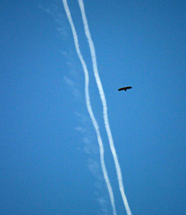 Traffic in the air (Ib Aarmo) Tags: blue sky fly eagle stripes eagles exhaust