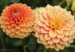 Flower (126) (-j0n4s-) Tags: flowers orange flower color green art nature flickr
