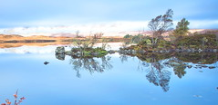 Tree Lined Reflections (PeterYoung1.) Tags: uk trees panorama water beautiful landscape scotland scenic rannochmoor peteryoung1