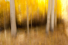 Aspen Abstract-6599 (Steve's Reflections) Tags: abstract color fall yellow aspentrees