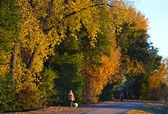 an evening stroll (nzosimova) Tags: autumn fall last evening canal fallcolors denver beam autumncolors trail suburbs stroll highline oldtrees