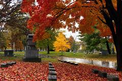 Red & Gold {Explore 10/23/2014] (In Wonder Photo) Tags: autumn trees red graveyard rain wisconsin landscape gold nikon tombstone milwaukee foresthomecemetery markadsit